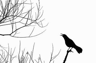 Crow 400x600px