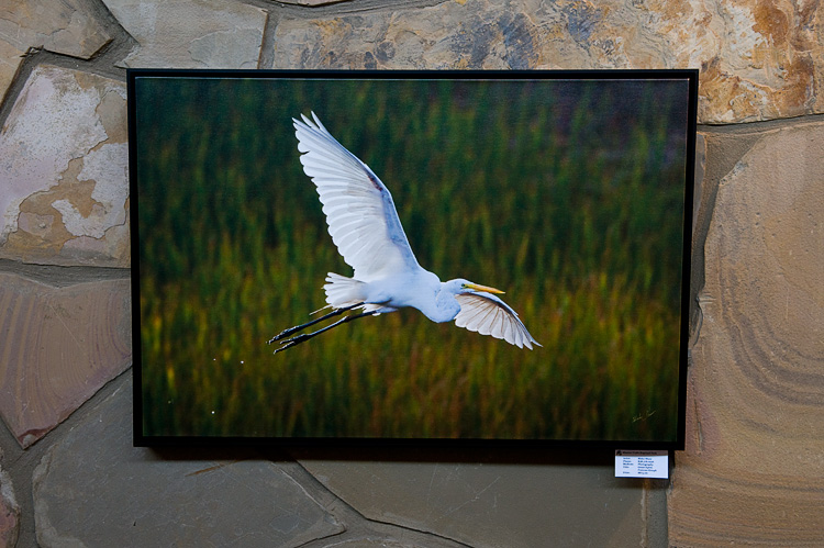 Egret on canvas