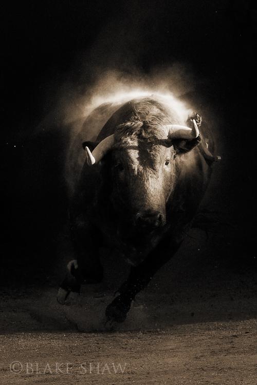 Leon bull copy