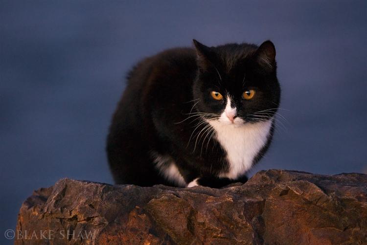 Feral cat 4