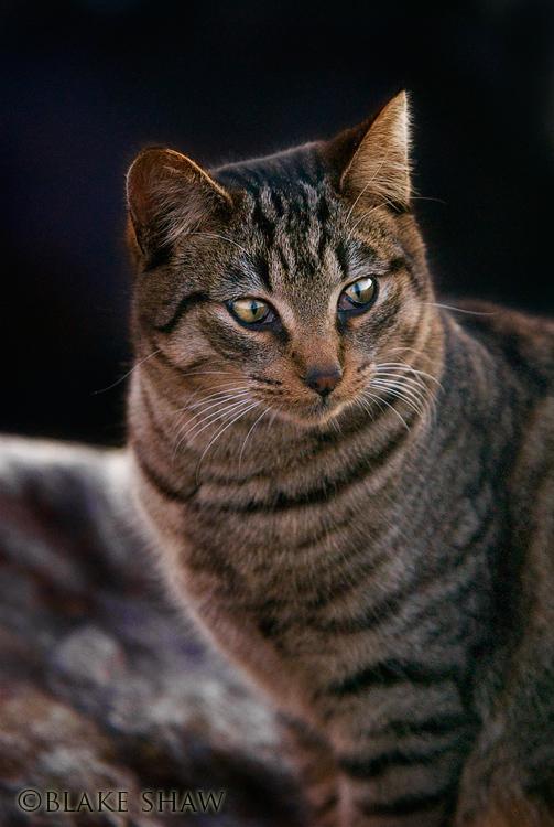 Feral cat 6