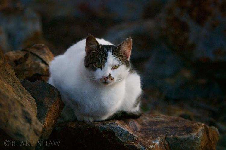 Feral cat 7