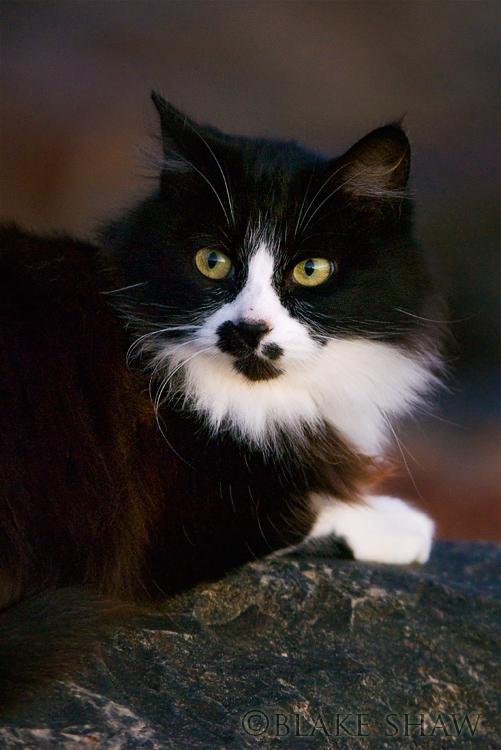 Feral cat 10