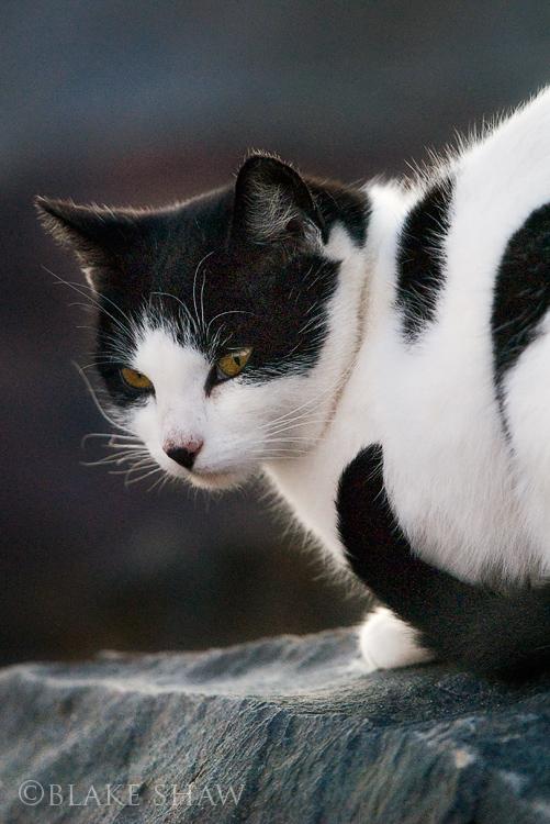 Feral cat 8
