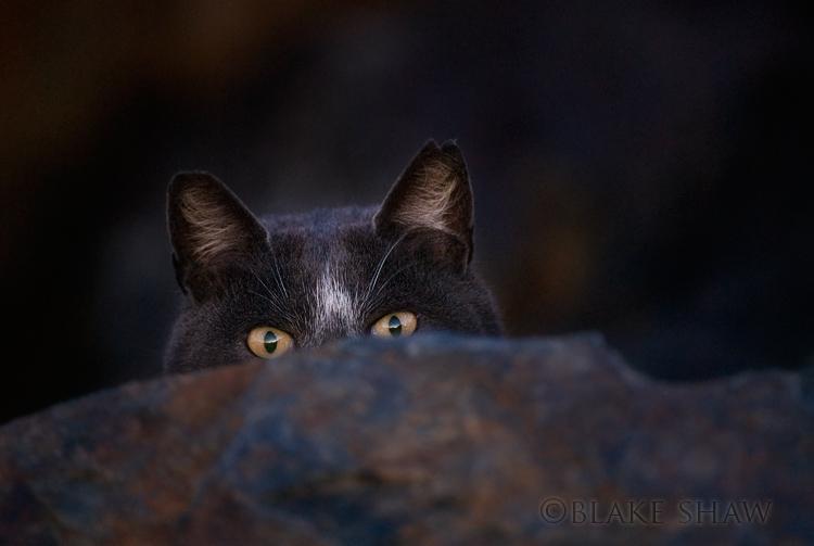 Feral cat 12