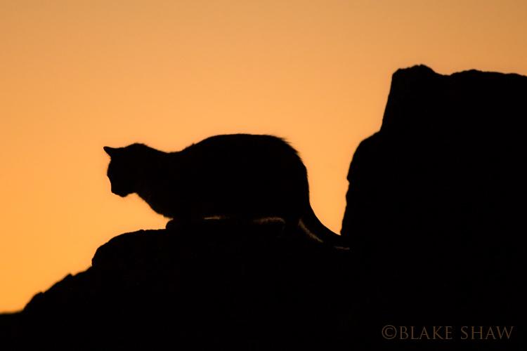 Feral cat 5