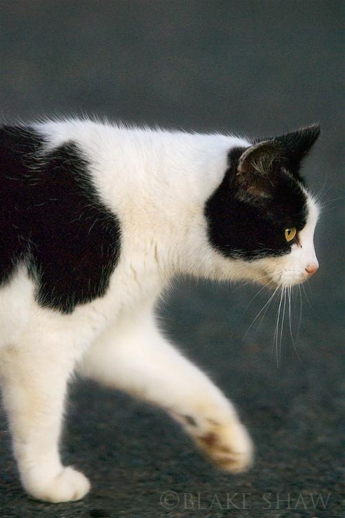 Feral cat 9