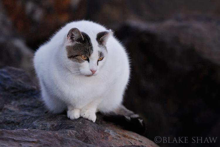 Feral cat 17