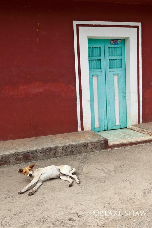 Dzitnup dog and door yucatan