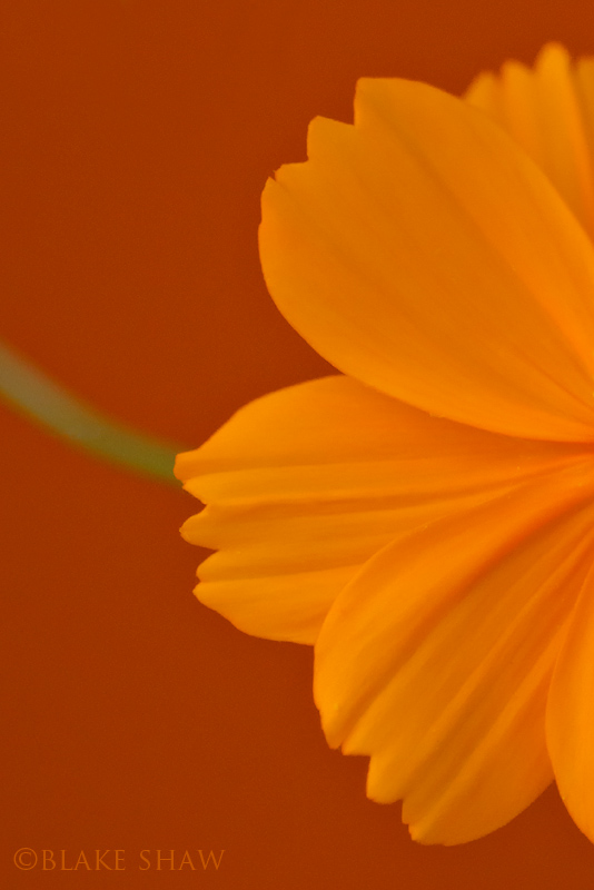 Orange flower abstract 3