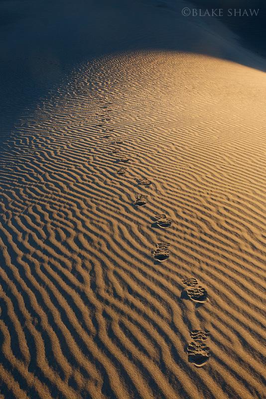 Sand dune footprints