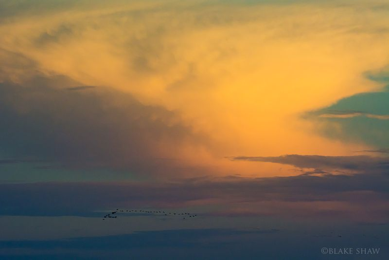 Birds and thundercloud