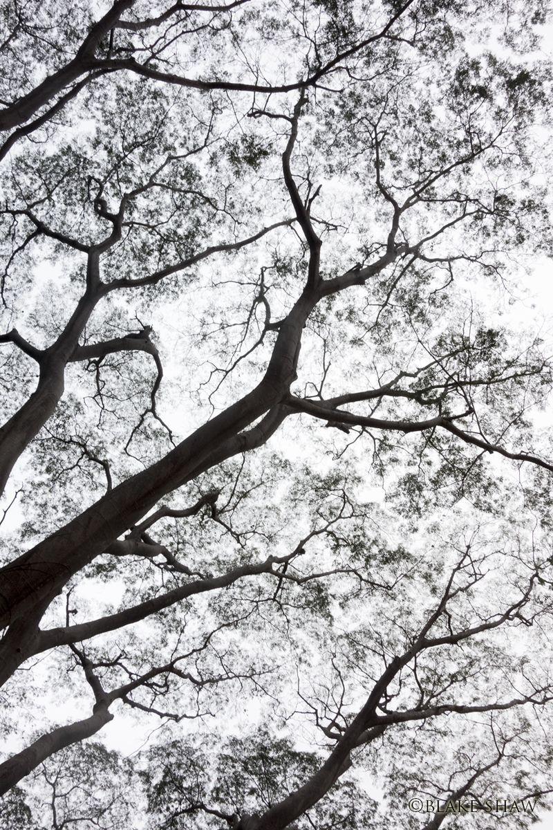Tree silhouette puerto vallarta