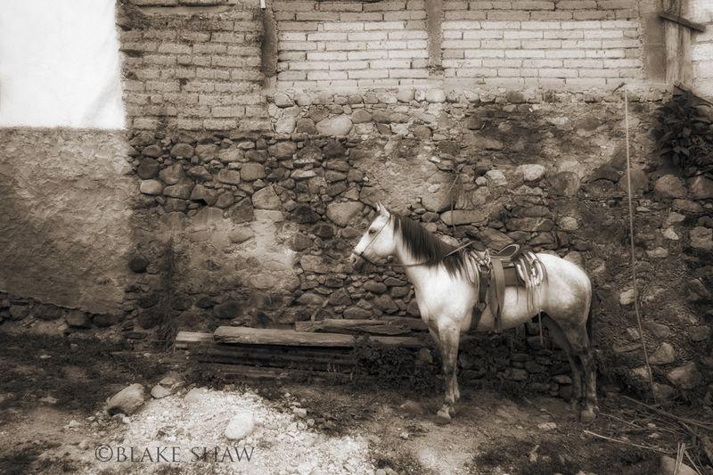 San sebastian horse