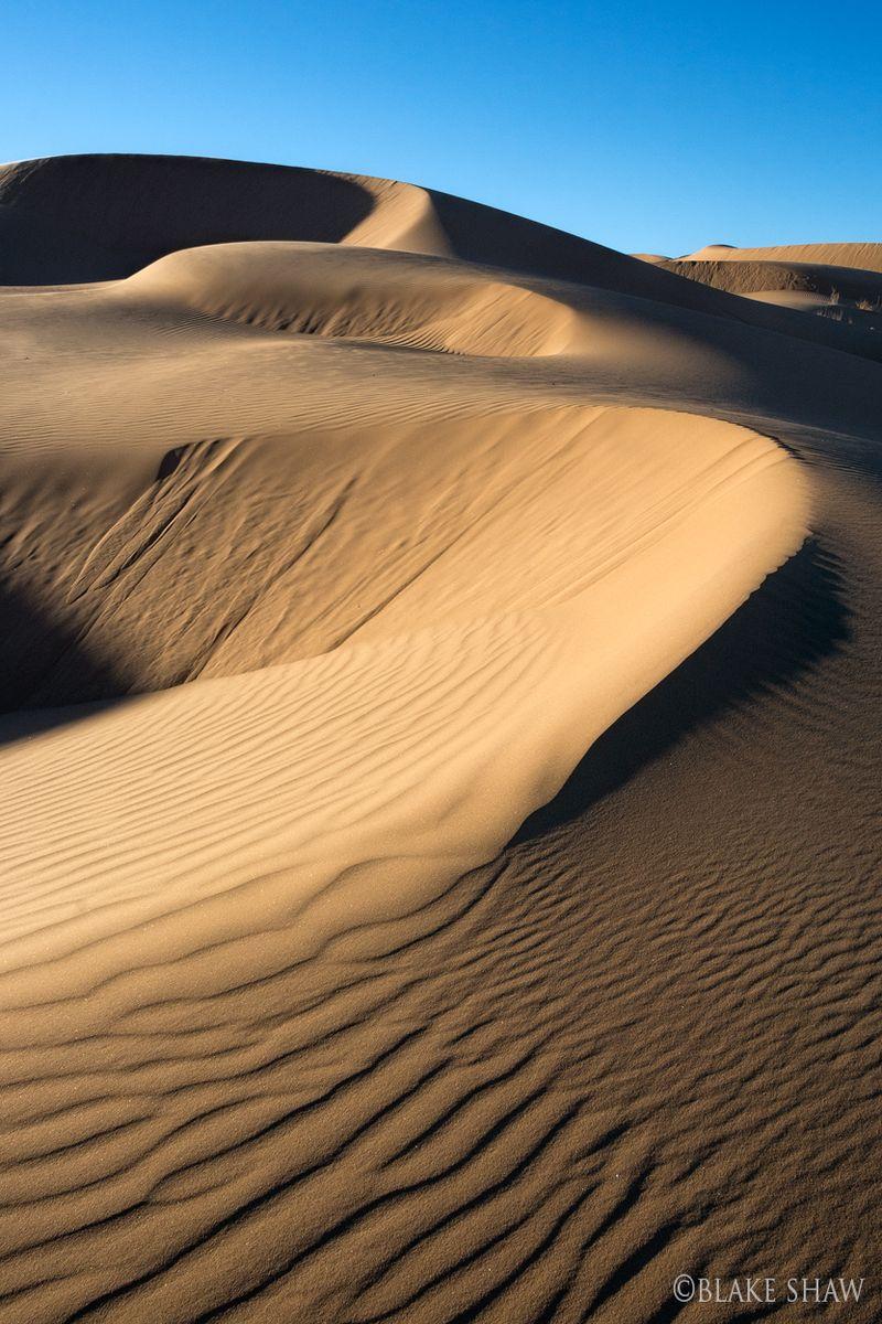 Pinacate dunes