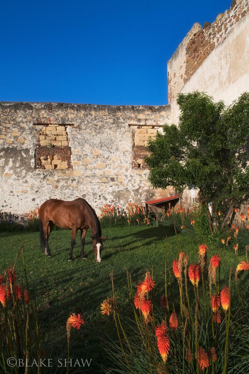 Tenexac horse
