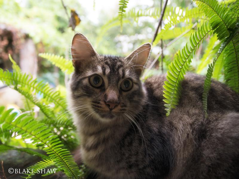 Honorio's cat