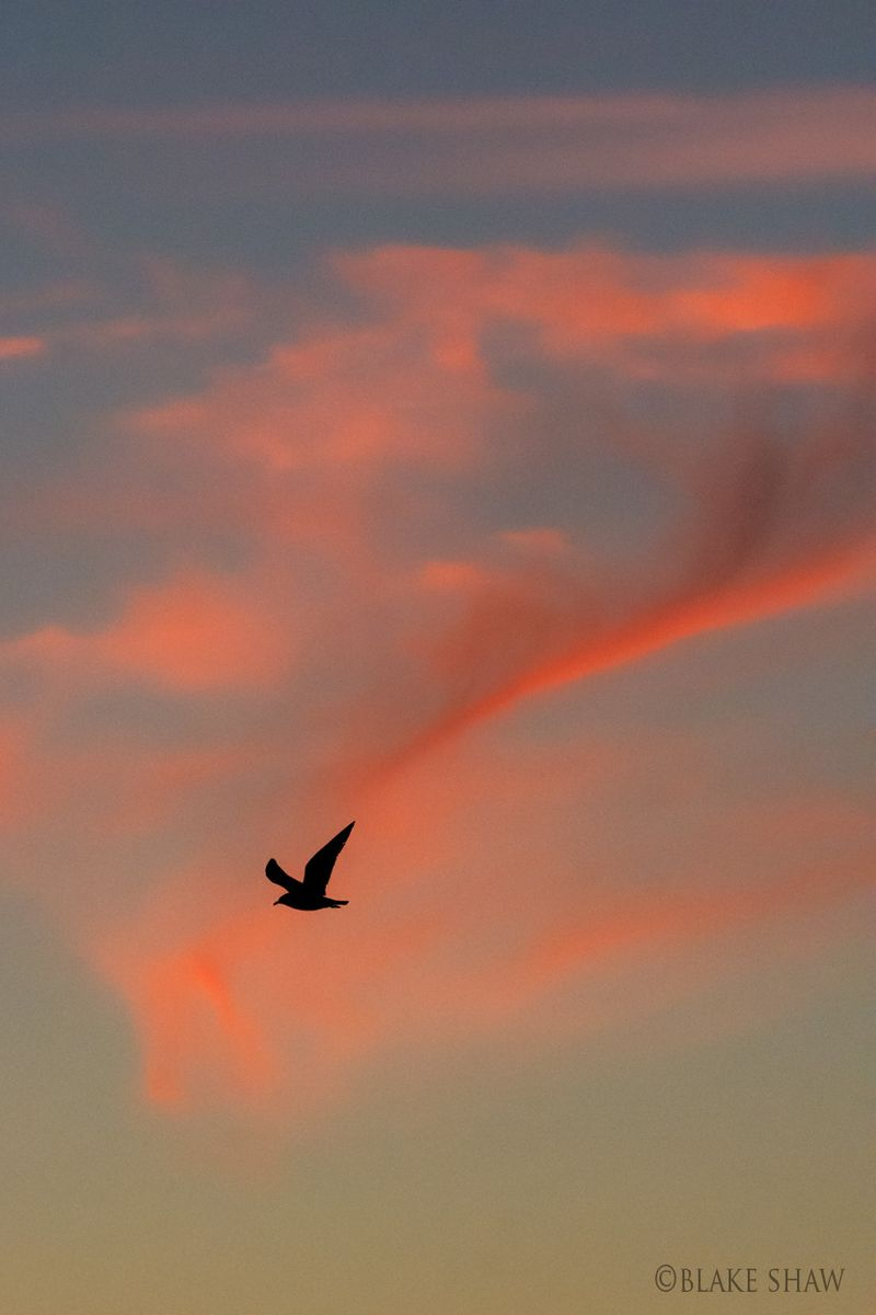 Gull and clouds