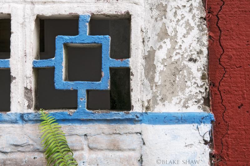 Fern and wall la antigua