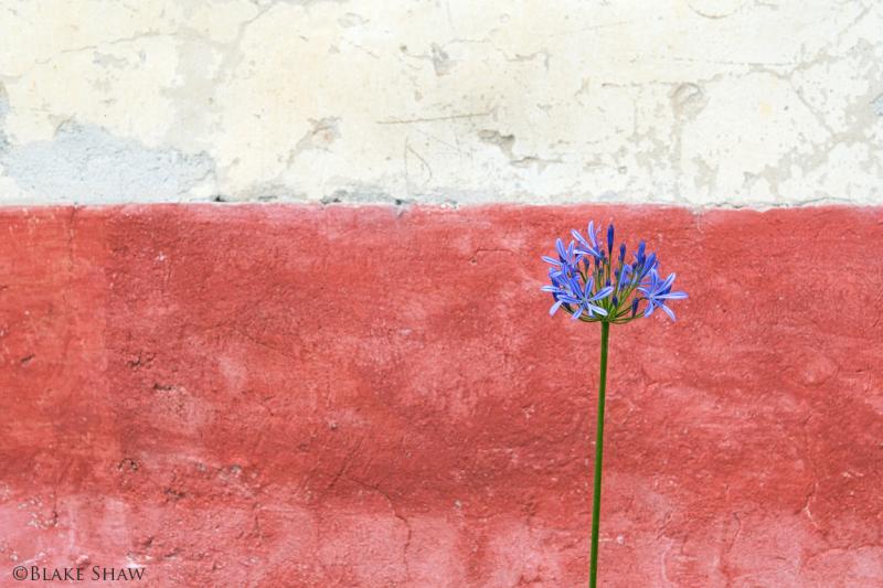 Flower at tenexac