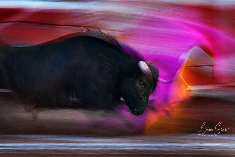 Mexicali bull motion copy