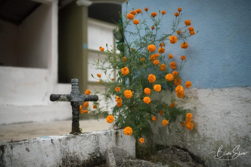 Xilitla cemetery marigolds