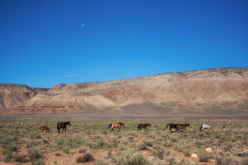 Horses grand canyon