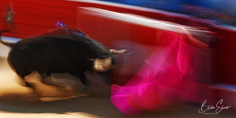 Bull motion