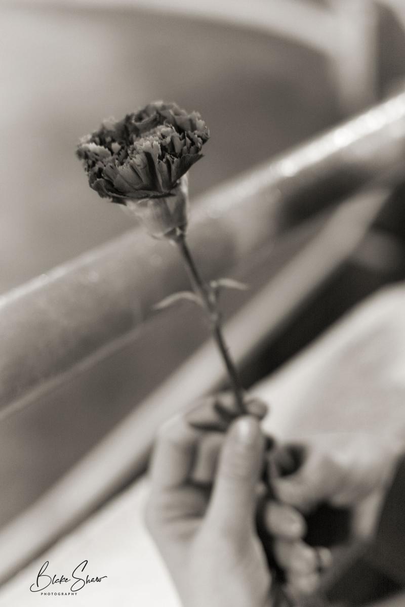 Carnation copy