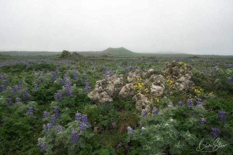 St paul landscape