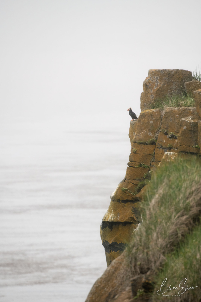 Puffin cliff