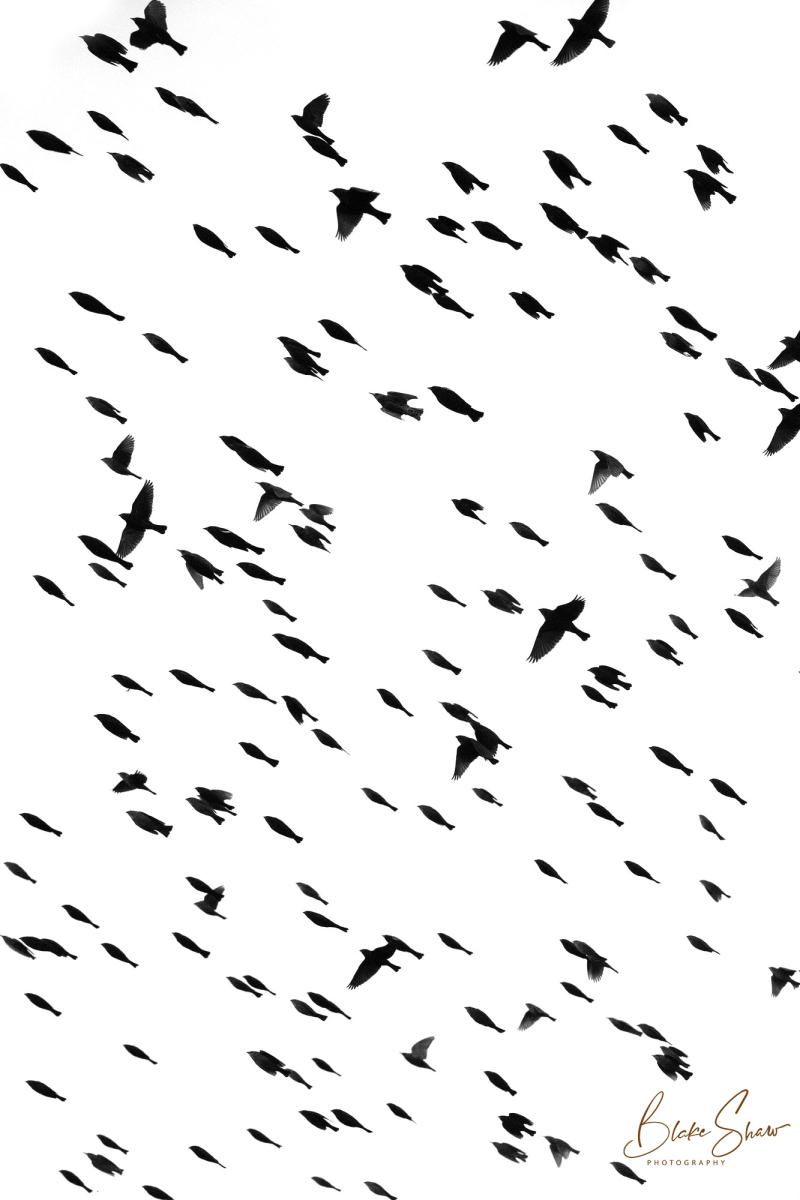 Birds silhouette blake shaw
