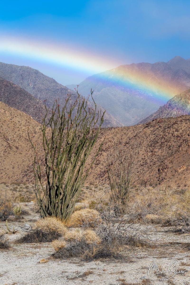Borrego rainbow blake shaw 2 copy