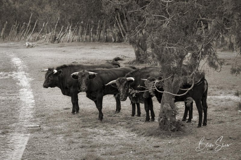 Tepetzala bulls 2