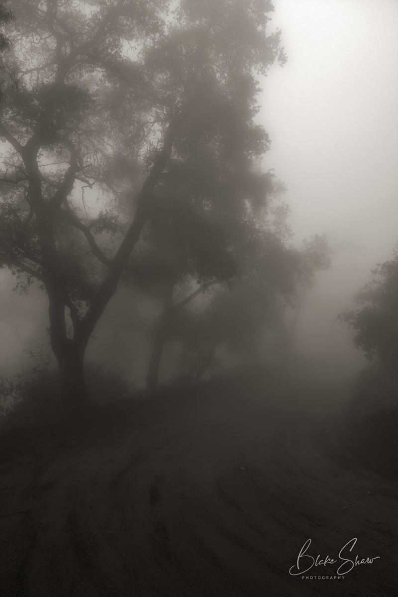Palomar trees 5