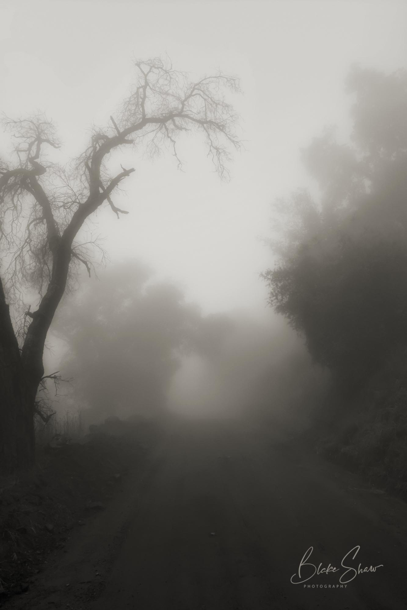 Palomar trees 6