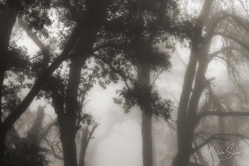 Palomar trees 10