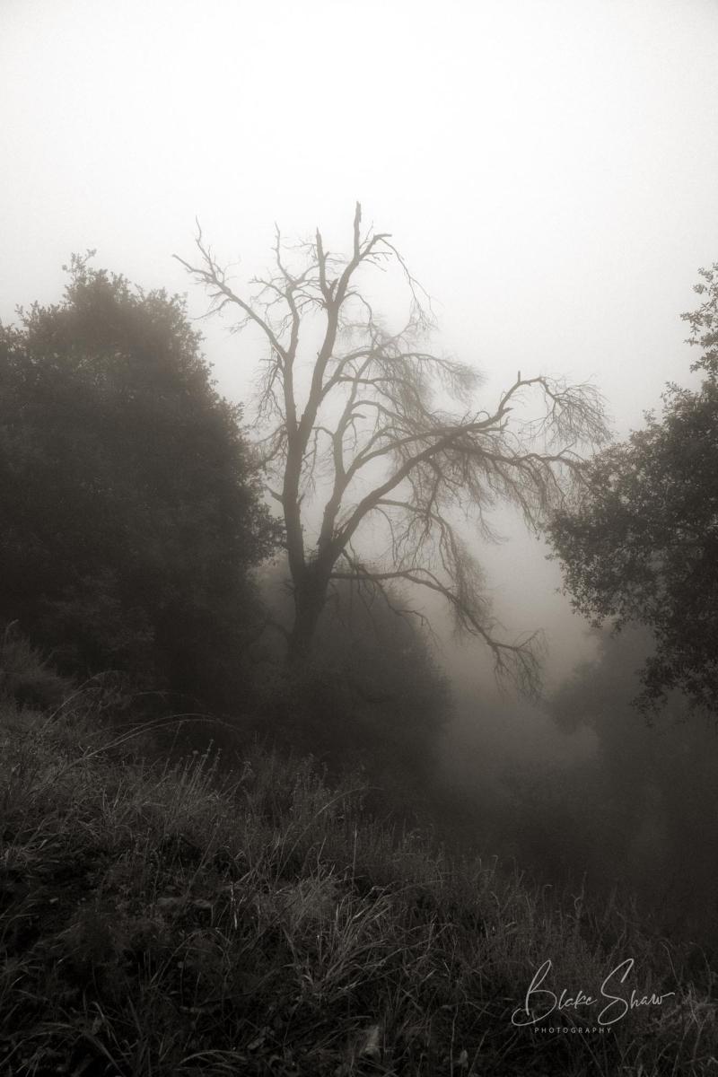 Palomar trees 4