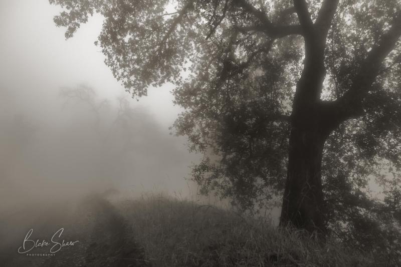 Palomar trees 7