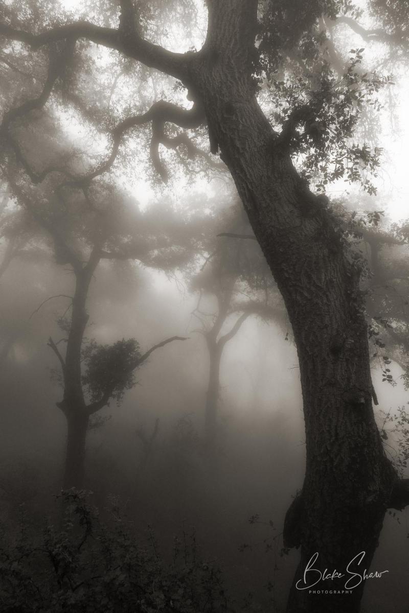 Palomar trees 8
