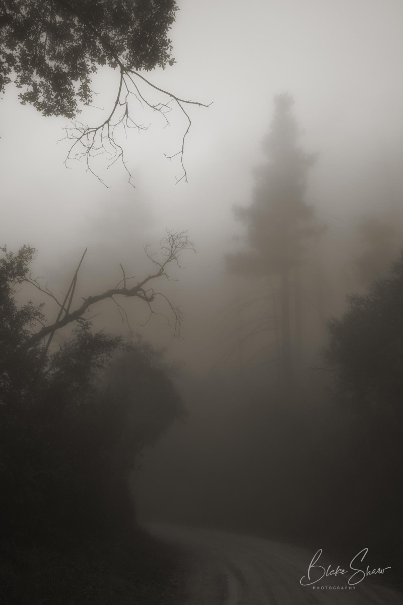 Palomar trees 13 copy