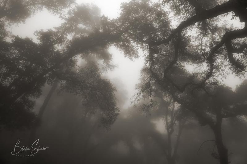 Palomar trees 11