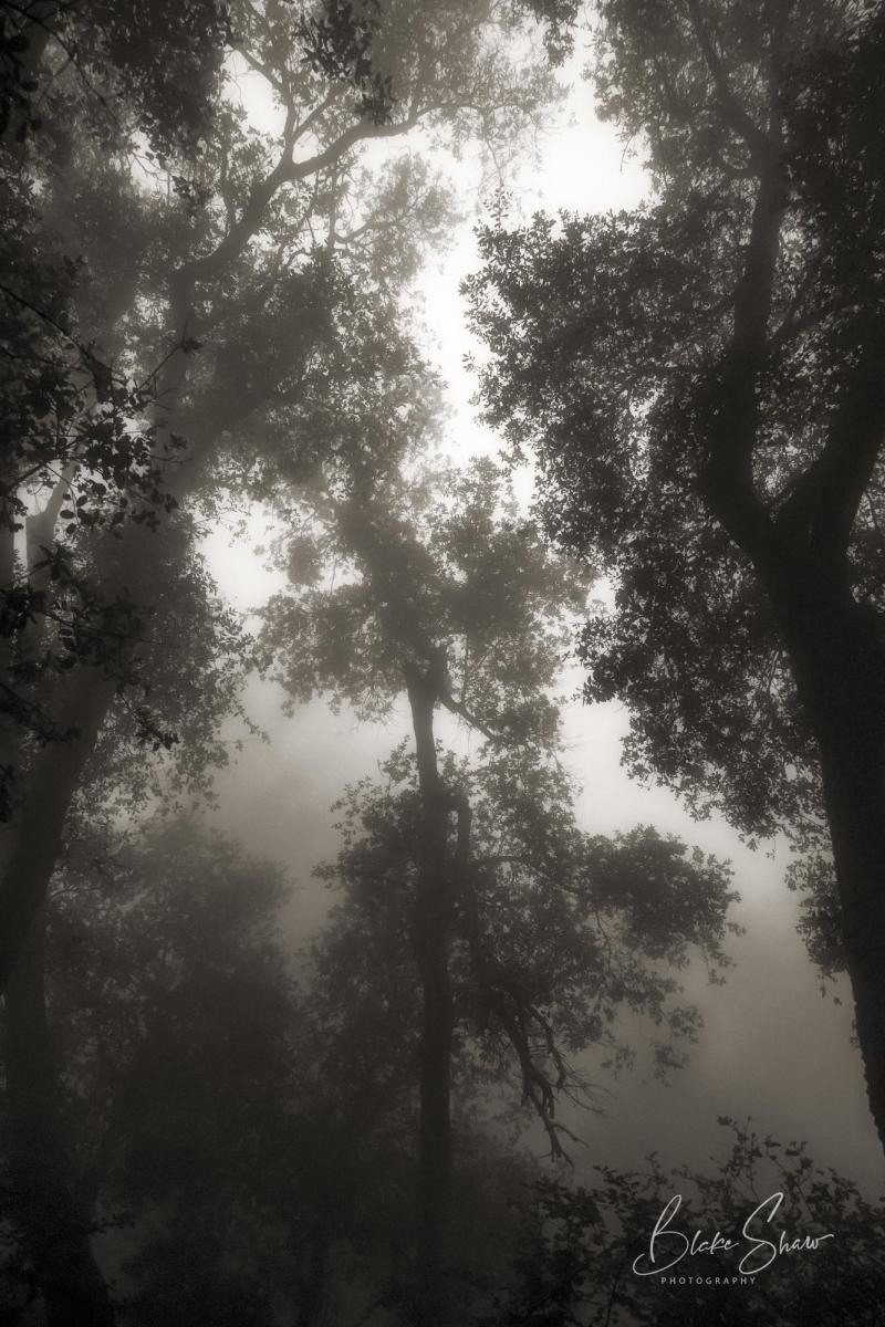 Palomar trees 12